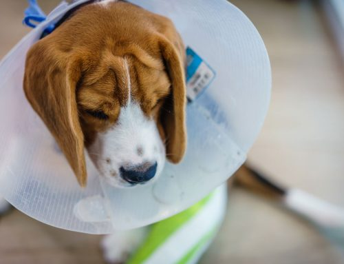 5 Facts About Cranial Cruciate Disease in Pets
