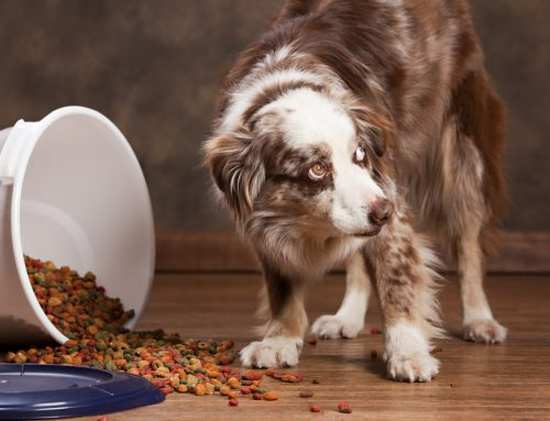 The Perils of Pancreatitis in Pets