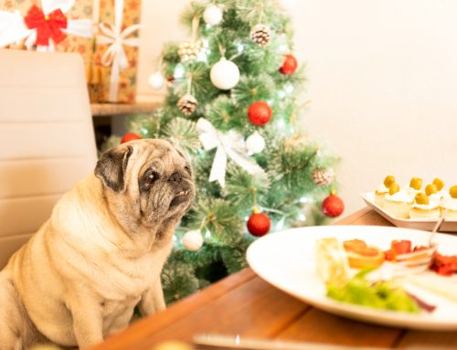 Holiday Hazards: How to Protect Your Pet