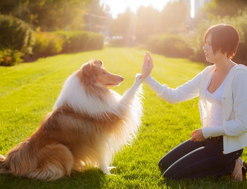 Tips to Successfully Train Your Dog