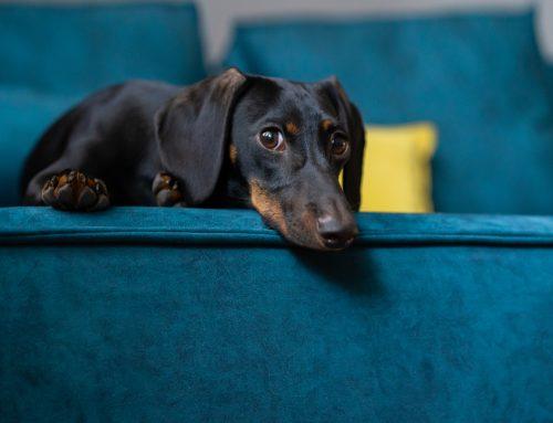 Dental Disease: One Dog's Story