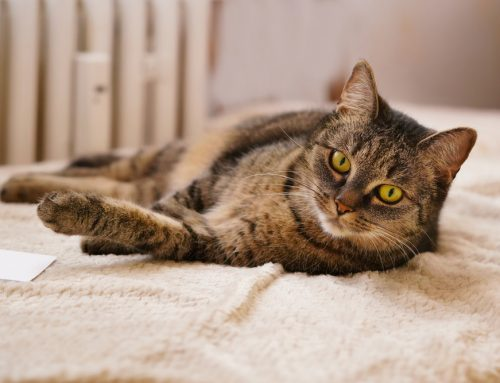 10 Tips to Keep Your Cat's Conduct Compliant