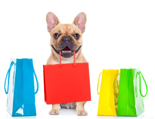 Christmas in July—5 Cool(ing) Gifts For Your Dog This Summer